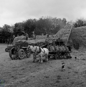 Threshing, Manor Farm, Pickering